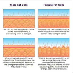 skin-cellulite